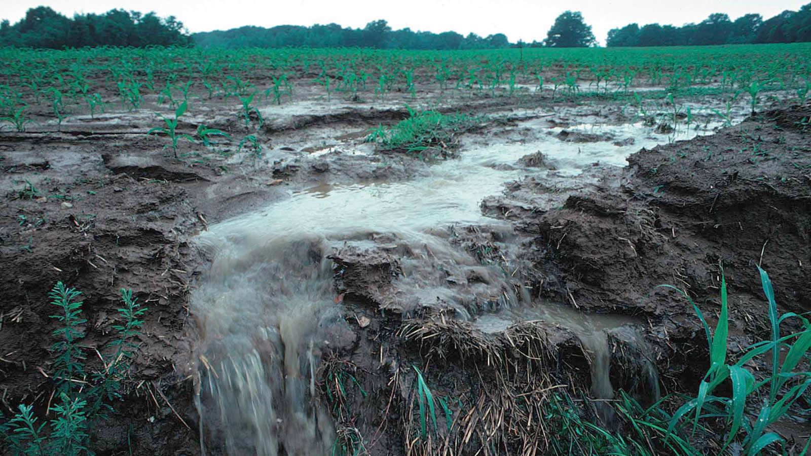"<h4>Polluting Our Water</h4><p>Runoff from farming fields can find its way into our rivers, streams and eventually our drinking water. Nitrate runoff can be especially harmful to infants, according to the EPA, and is linked to ""blue baby syndrome"" because the babies have difficulty transporting oxygen.</p><em>Penn State</em>"